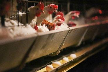 Рост мяса, птицы, рыбы и сыров российского производства сопоставим с сокращением импорта, который случился после введения Россией продуктового эмбарго