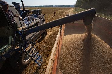 Пошлина на экспорт зерна будет рассчитываться в рублях