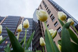 Этой весной ипотека расцветает на субсидиях государства