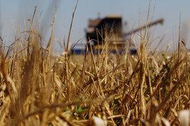 Главные российские сельскохозяйственные регионы пересматривают виды на урожай зерна