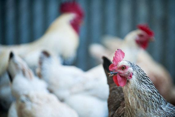 Успехи в наращивании объемов отечественного производства, в частности мяса, во многом обусловлены сделанными ранее инвестициями, сказано в исследовании