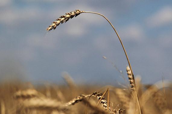 За 2015 г. площади под генномодифицированными растениями в мире сократились на 1%