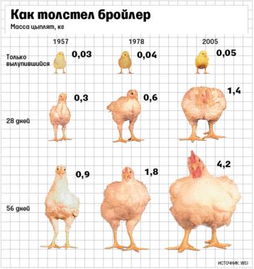 Зарубежные продавцы начинают отказываться от мяса кур, которые растут слишком быстро