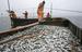 """Женщинам в России не запрещено рыбачить, ограничения действуют только на прибрежный лов """"на ручной тяге закидных неводов, подледный лов рыбы на закидных неводах, ставных сетях и вентерях""""."""