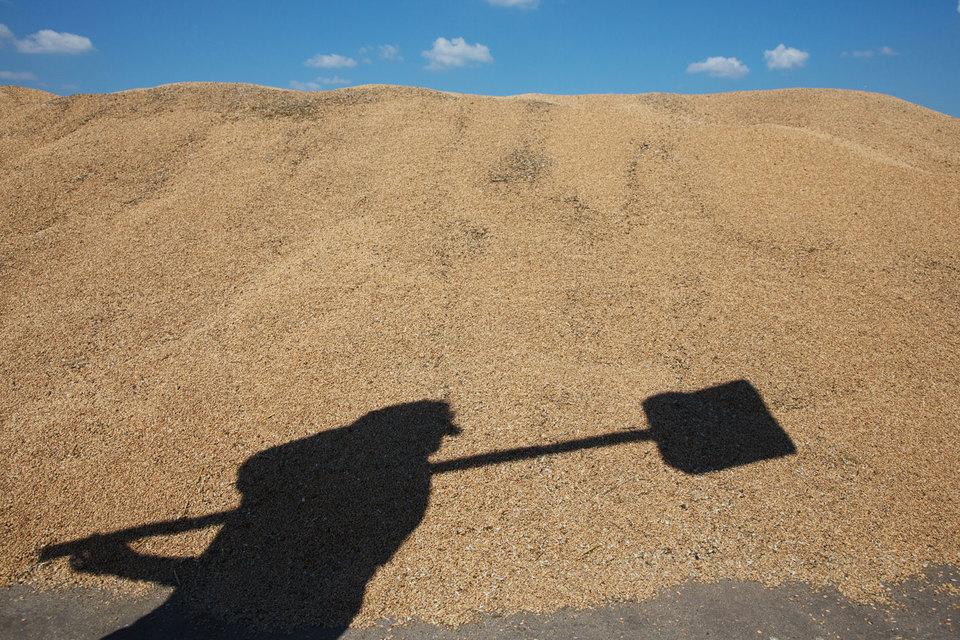 В России появится классическая зерновая биржа: на ней будут продаваться контракты с четкими условиями поставки