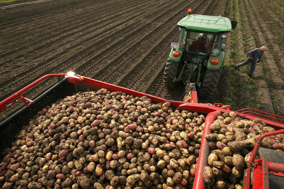 По мнению участников рынка, сейчас удачное время для инвестиций в овощеводство
