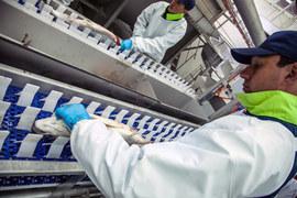 Всего в прошлом году группа произвела 4500 т лосося и 600 т форели на 1,5 млрд руб.