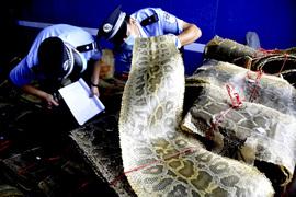 Китайские производители контрафакта научились подделывать рейды полиции