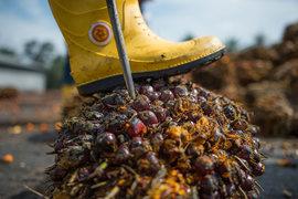 Россия защитится от пальмового масла с помощью акциза