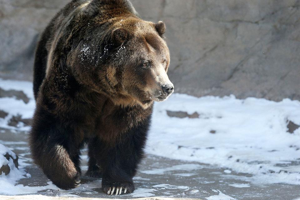 """Мировой индекс акций упал с пика на 20%, что технически считается началом """"медвежьего"""" тренда"""