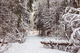 «Система» зашла  в сибирский лес