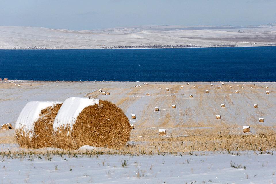 Группа «Бин» отрицает даже интерес к сельскохозяйственному бизнесу