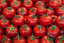 «Русагро» хочет выращивать огурцы, помидоры и салат круглый год