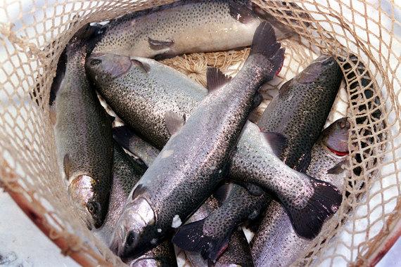 Фонд экс-губернатора Приморья купил «Русскую рыбную компанию»