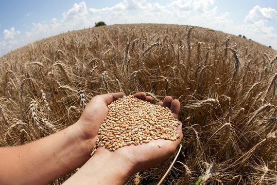 Украинские производители делают лучше прогнозы поизготовлению подсолнечного масла
