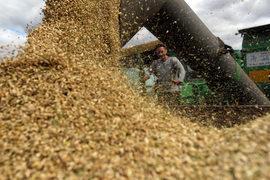Экспорт зерна из России начал снижаться, а урожай ожидается рекордный