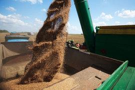 Россия увеличила поставки зерна на традиционные для Франции экспортные рынки