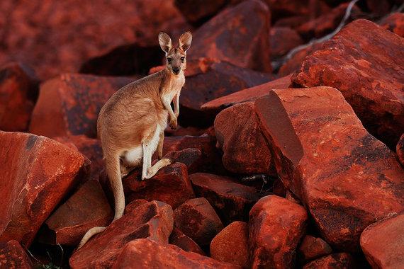 Эксперты подчеркнули 25-летие беспрерывного роста экономики Австралии