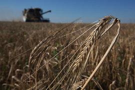 Часть собранного в этом году рекордного урожая зерна может пропасть