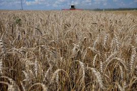 После слабого экспорта зерна в июле - сентябре продажи зерна за границу могут наконец выйти на показатели прошлого года