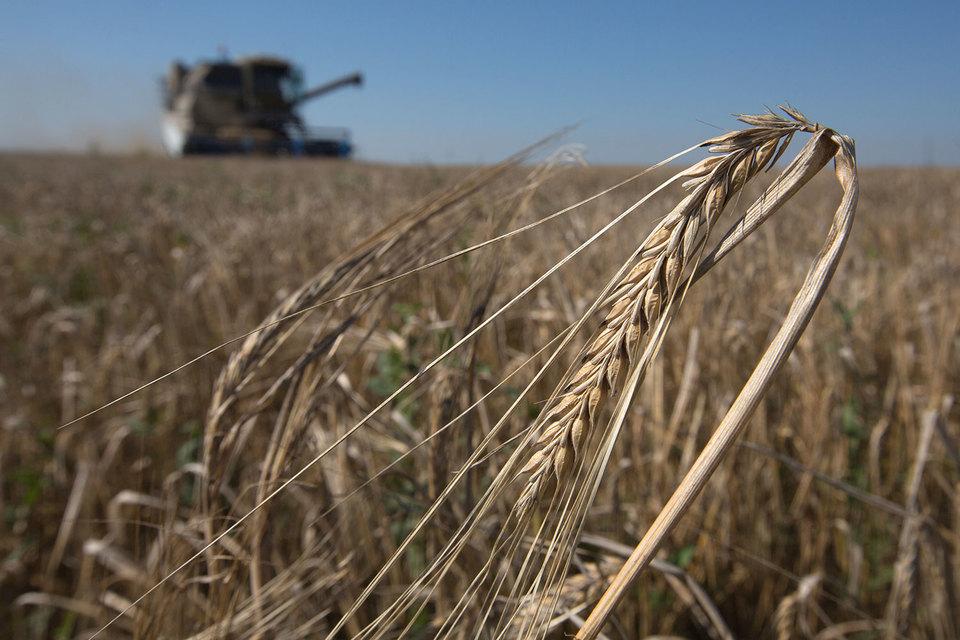 Россия побила рекорд 2008 года по сбору зерновых