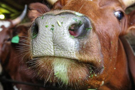 Молочная продукция комбината PepsiCo изъята из продажи из-за ящура