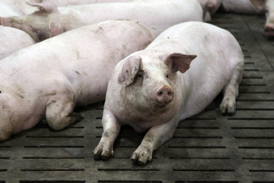 Потребление мяса в России начало восстанавливаться