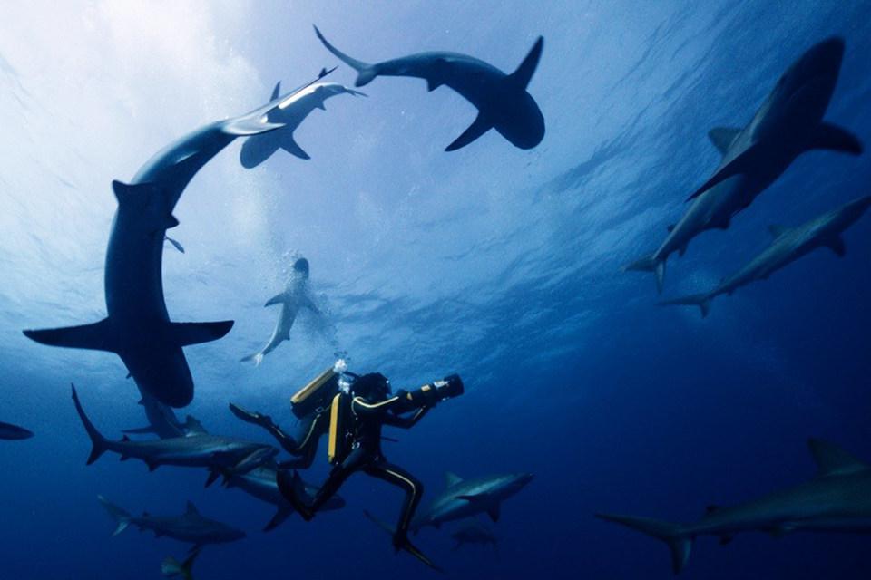 В фильме много красивых подводных съемок, но сегодняшнего зрителя ими не удивишь