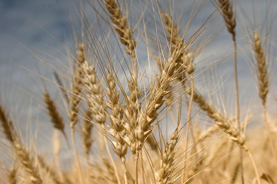 В модернизацию агрохолдинга «Степь» может быть вложено до 3 млрд рублей