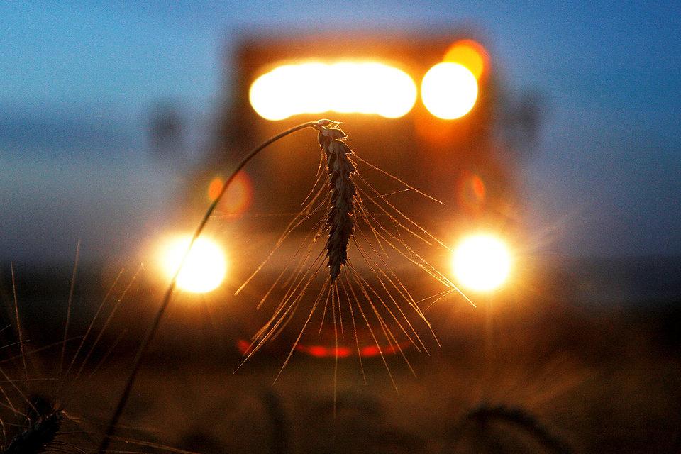 Россия собрала рекордный урожай зерна за всю свою историю