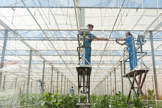 Теплицы — одно из наиболее востребованных у аграриев направлений