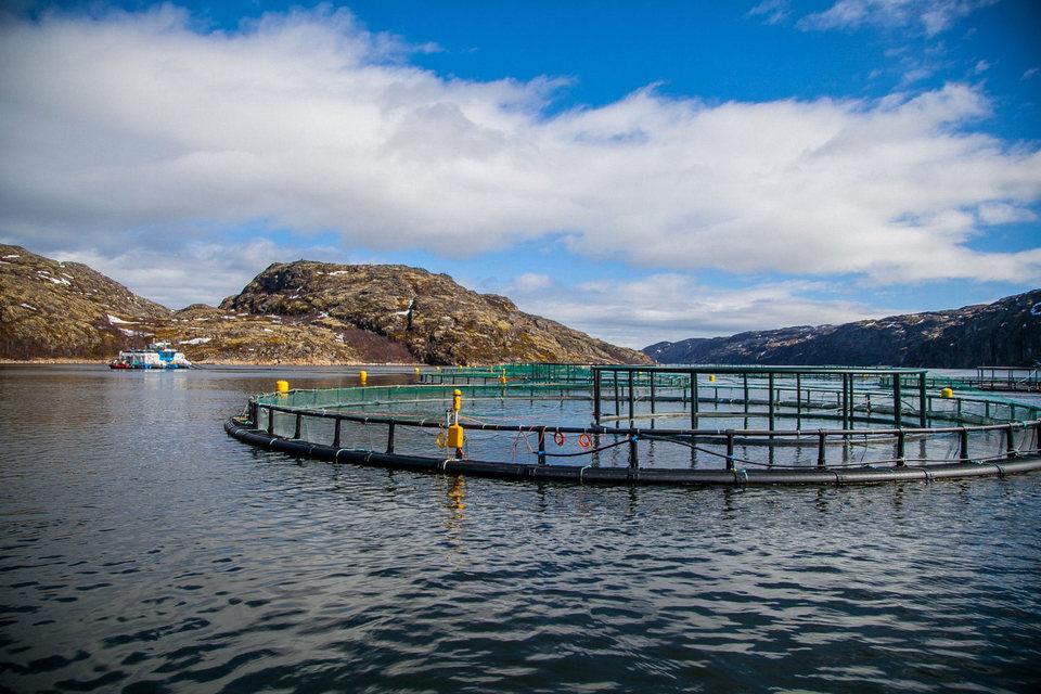 По завершении сделки «Русская аквакультура» будет только выращивать рыбу