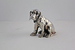 Серебряная собака