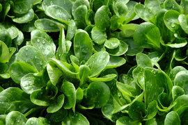 Калифорнийский стартап, выращивающий овощи на бывшем складе, надеется преобразить сектор овощеводства
