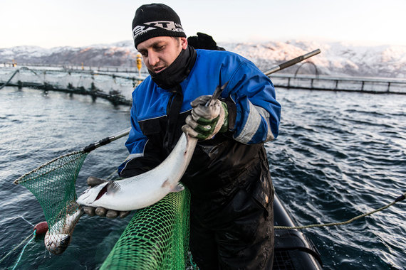 «Русская аквакультура» снова идет на биржу