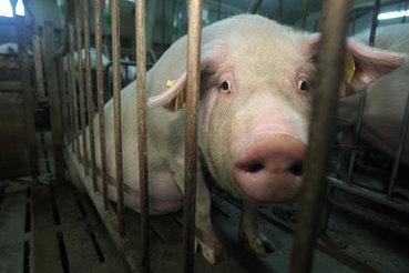 Агрохолдинг «Черкизово», один из крупнейших производителей мяса в России, сообщил о снижении в 2016 г. чистой прибыли более чем в три раза по сравнению с 2015 г. до 1,9 млрд руб.