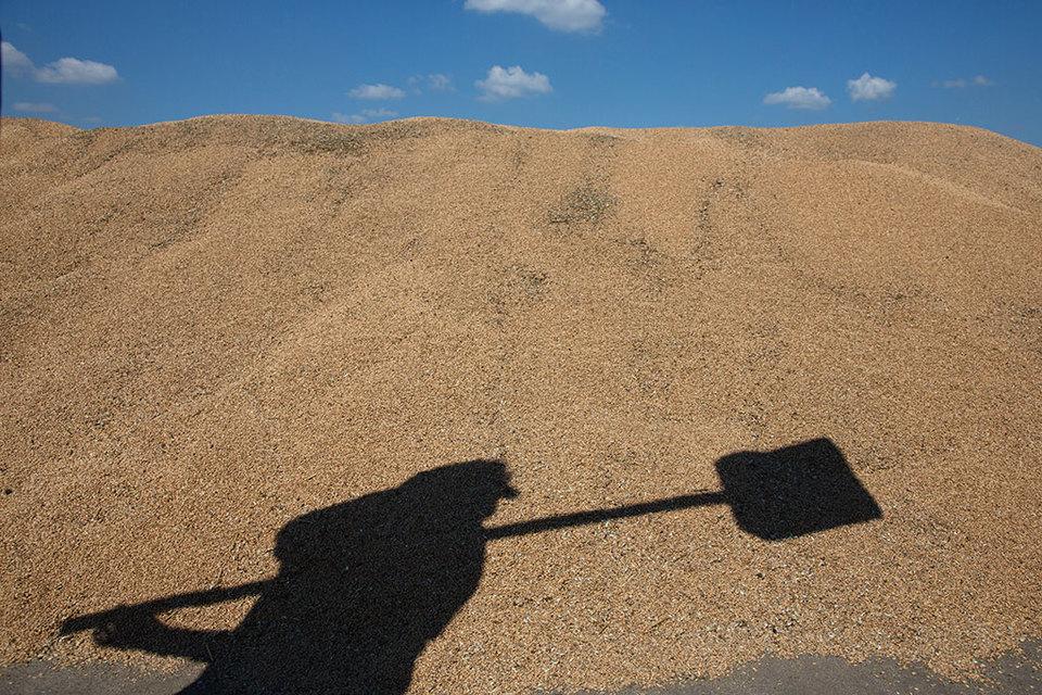 В феврале нынешнего года на экспорт пошло 1,8 млн т зерновых и 1,2 млн т пшеницы – обе цифры ниже экспорта в феврале прошлого года примерно на 40%.