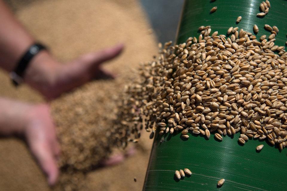 Турция находится на втором месте по поставкам пшеницы из России