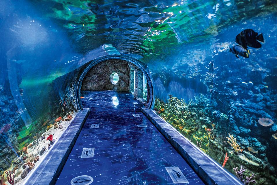 Крокус Сити Океанариум, вид на одну из экспозиций