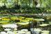 Королевские особы собирали в садах кью лучшие деревья и экзотические растения