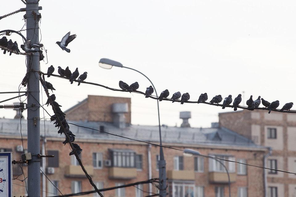 Генпрокуратура сочла преступным демонтаж линий связи в российской столице