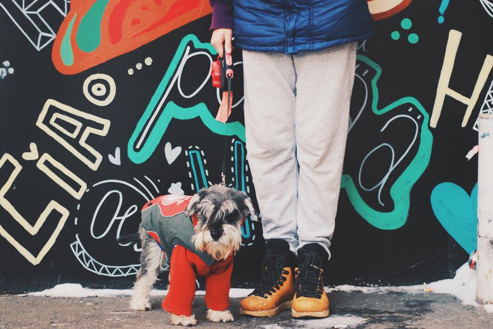 Один из «клиентов» компании «Собака-гуляка»
