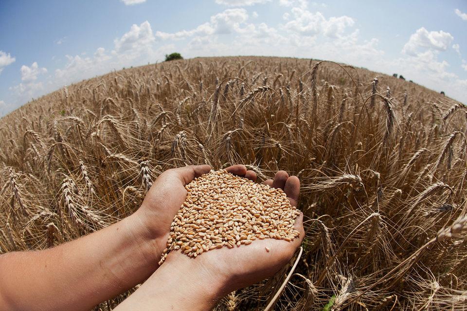 Минсельхоз снизил прогноз поэкспорту зерна в2015-м году