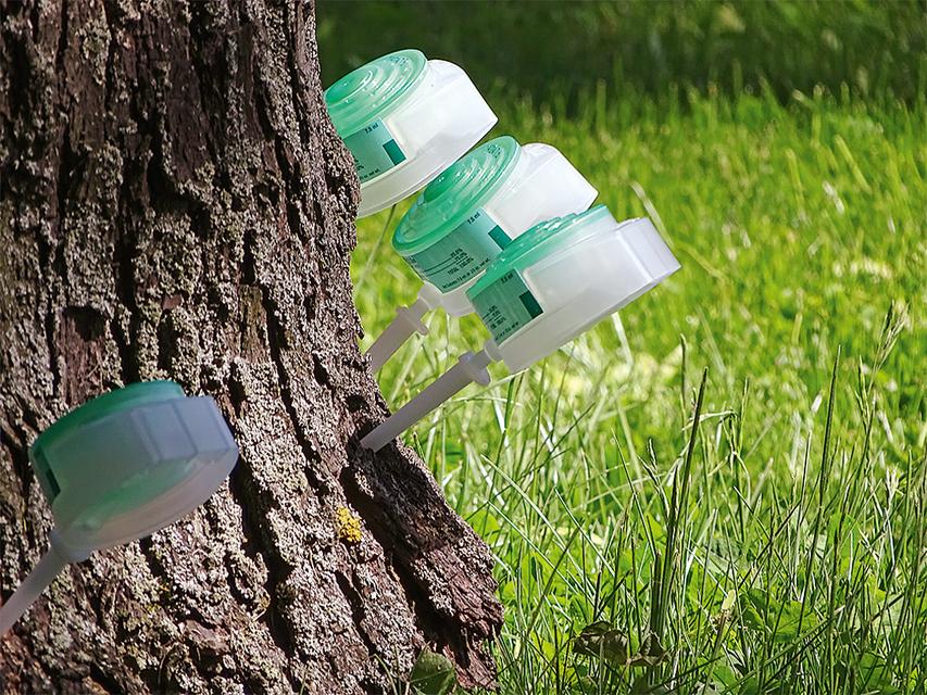 Для лечения деревьев Mauget использует методику стволовых микроинъекций