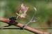 Золотая лозаСтать владельцем виноградника в Бордо можно, но много бюрократической волокиты. Зато есть вариант получить сертификат на аренду лозы, с которой снимут урожай в октябре 2017 года в хозяйстве de Pitray. На лозе будет весь год висеть табличка с именем дорогого вам человека, а после сбора урожая он сможет онлайн посмотреть на рождение своего напитка. Затем в течение 18 месяцев вино будут выдерживать в дубовых бочках, а потом разольют по бутылкам. И лишь после этого – в конце 2019 года – вино погрузят в самолет и привезут по указанному адресу. Кстати, дизайн именной этикетки предлагается выбрать самостоятельно.