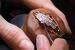 Процесс создания драгоценного корпуса ювелирных часов Serpenti, под крышкой которых скрывается циферблат