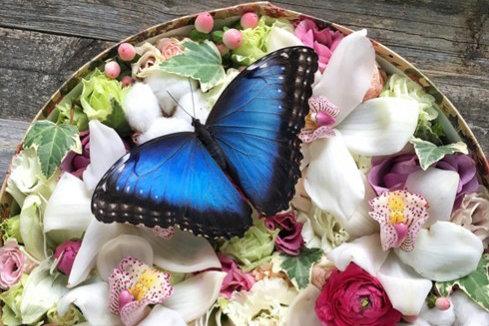 Живут бабочки от двух дней до двух недель в зависимости от их вида и качества ухода