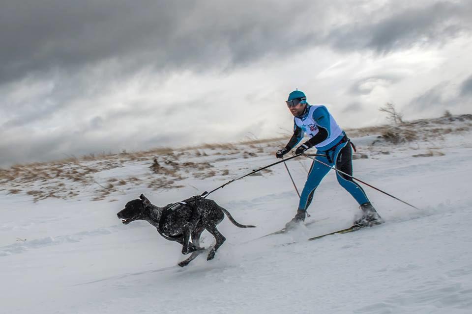 А это скиджоринг – катание на лыжах с собакой