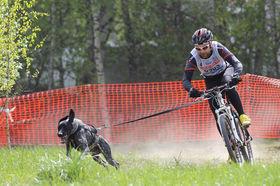 Байкджоринг – это езда на велосипеде с собакой