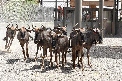 Жителями сафари-парка станут 50 000 диких африканских животных